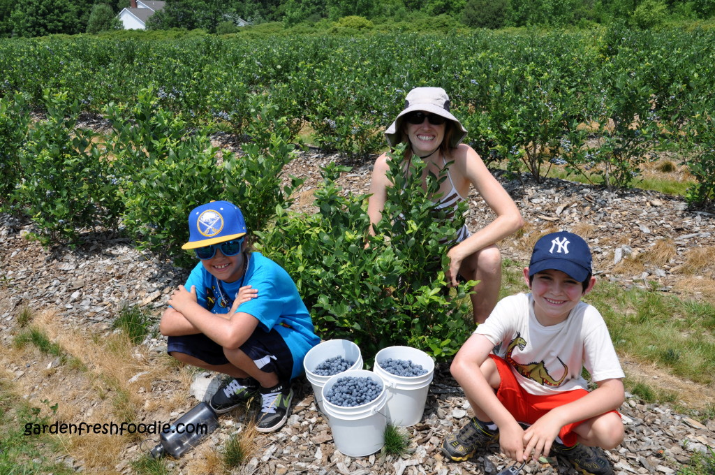 Local Blueberry Picking