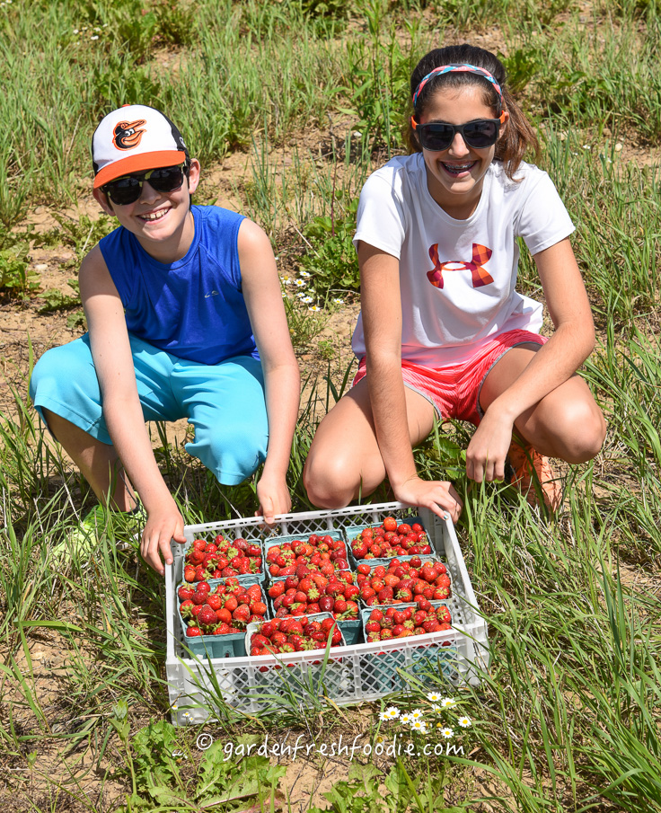 Just Picked Strawberries & My Helpers