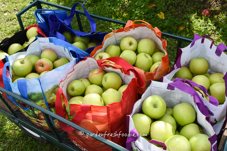 Garden Fresh Apple Haul