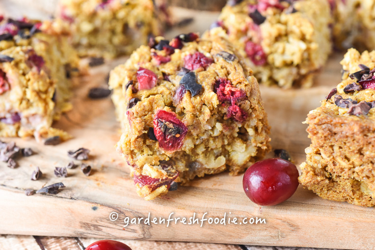 Pumpkin Oatmeal Cranberry Bars With Cacao